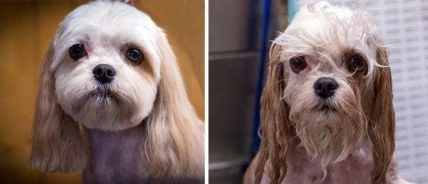 もふもふな動物たちがお風呂で変貌する…!【犬猫画像】 (20)
