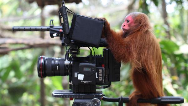 カメラに興味津々な動物の画像 (14)