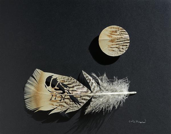 鳥の羽から切り取られた鳥類や動物のモチーフ (11)
