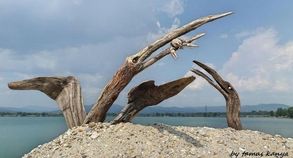 歪な形がゾンビっぽい!ドナウ川の流木で作られた彫刻作品 (3)