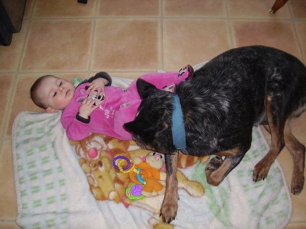 ペットは大切な家族!犬や猫と人間の子供の画像 (71)