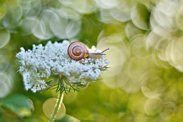 メルヘンチック!カタツムリの小さな世界を激写 (14)