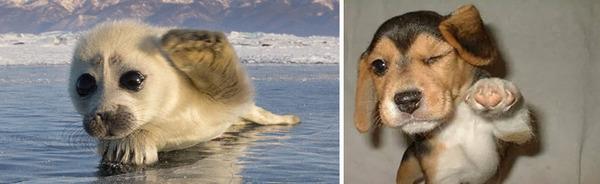 アザラシって犬そっくりじゃね?犬とアザラシを比較画像! (35)