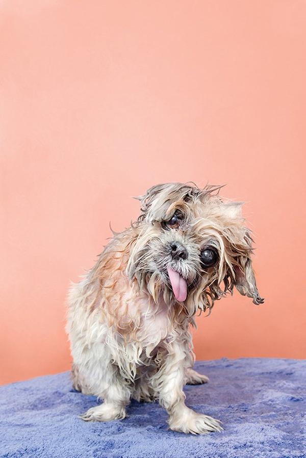 洗い立てだぜ!濡れた犬の写真シリーズ『Wet Dog』 (6)