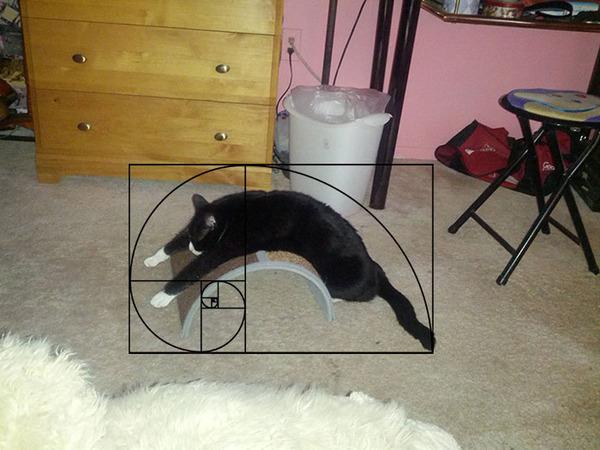 猫と黄金比の関係画像!猫の美しさの秘訣は黄金比にあり (23)
