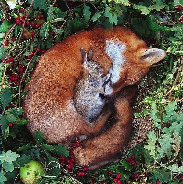 キツネとウサギのお昼寝