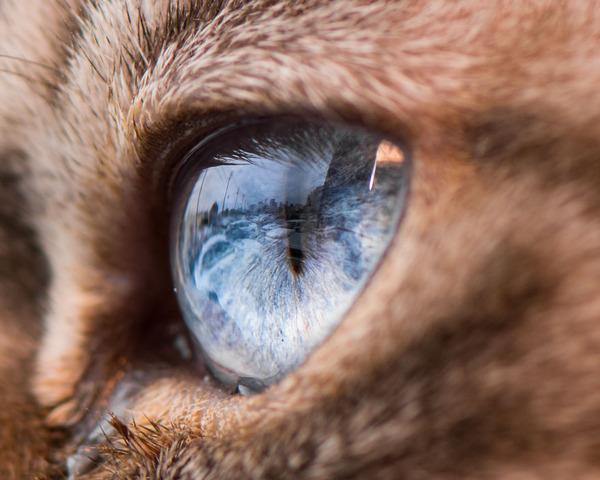 まさにキャッツアイ!綺麗な猫の瞳を撮影した画像16枚 (11)