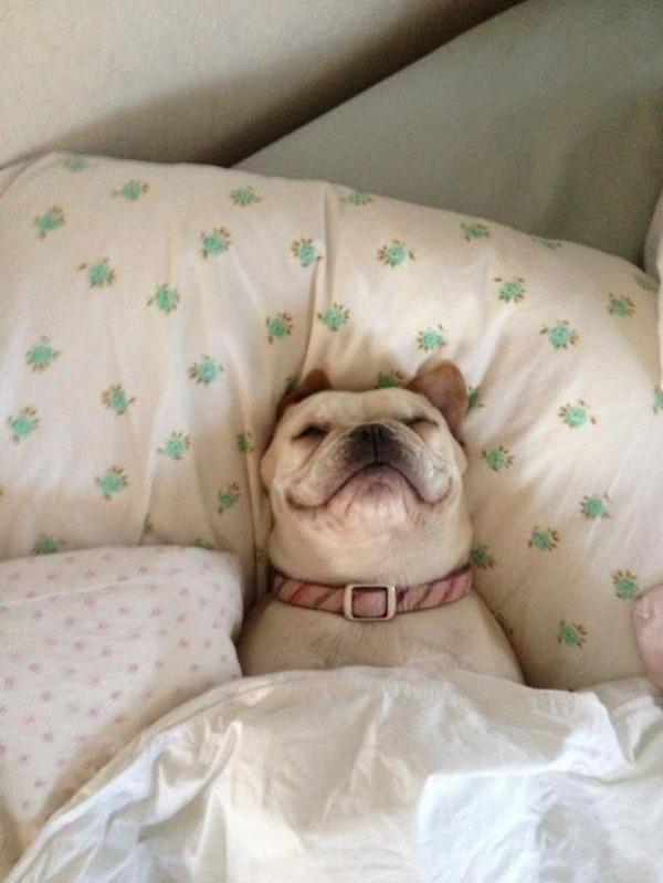 ベッドで寝る犬 かわいいおもしろ画像 2
