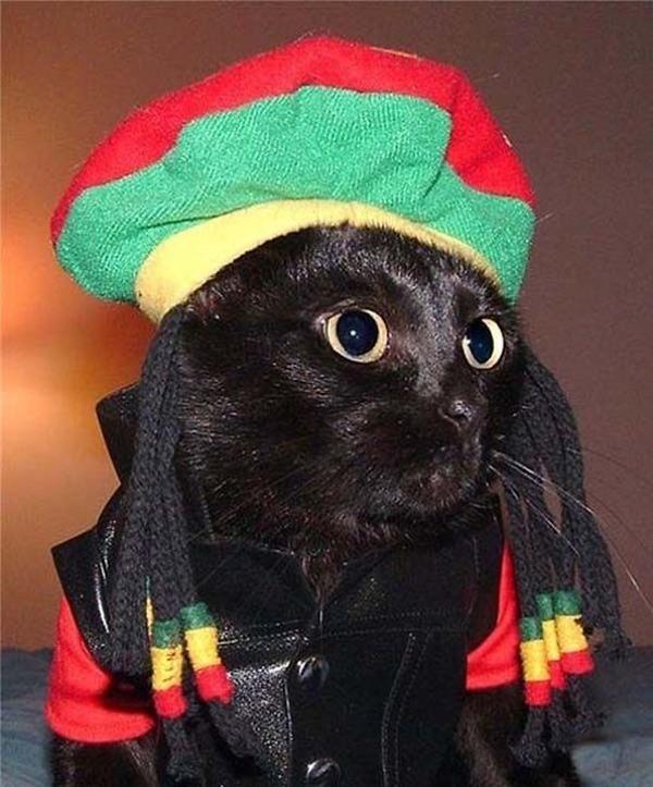 コスプレ猫!ハロウィンだし仮装した猫画像 (5)
