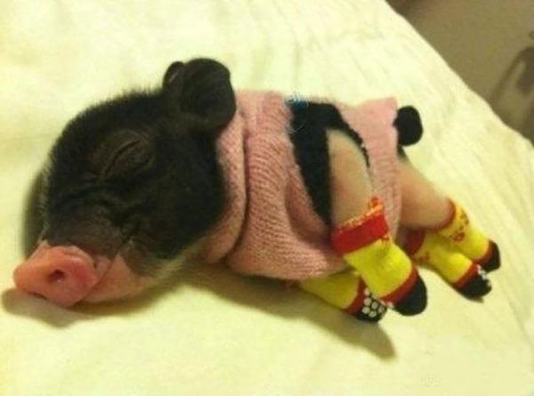 寒いからニットのセーターを小動物に着せてみた画像 (5)