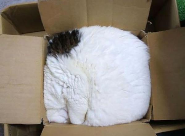 寝てるだけなのに…かわいすぎる猫たちの画像 (24)