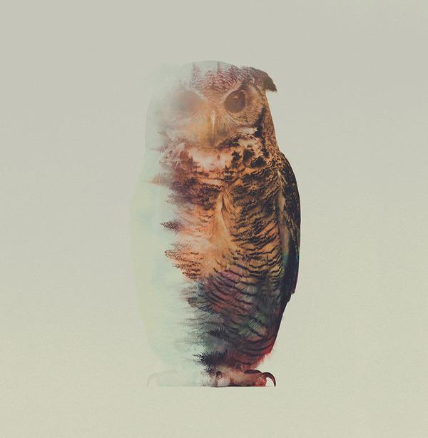 フクロウの二重露光写真byアンドレアス・リー