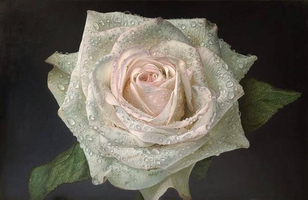 高精細!水滴をまとう写実的で美しいバラの花の油絵 (7)