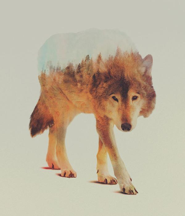 オオカミの二重露光写真byアンドレアス・リー 3