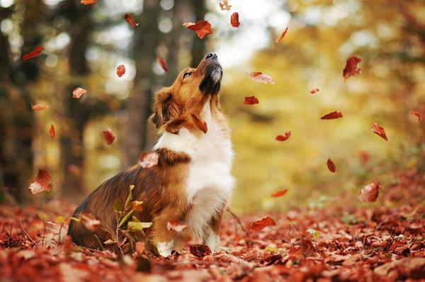 秋が来た!紅葉と遊ぶ犬画像 (4)