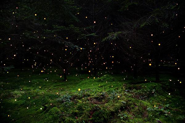 神秘的な森の画像 エリー·デイヴィス 2