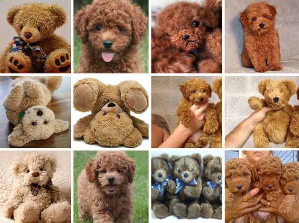 何かとそっくりな犬の比較画像 (3)