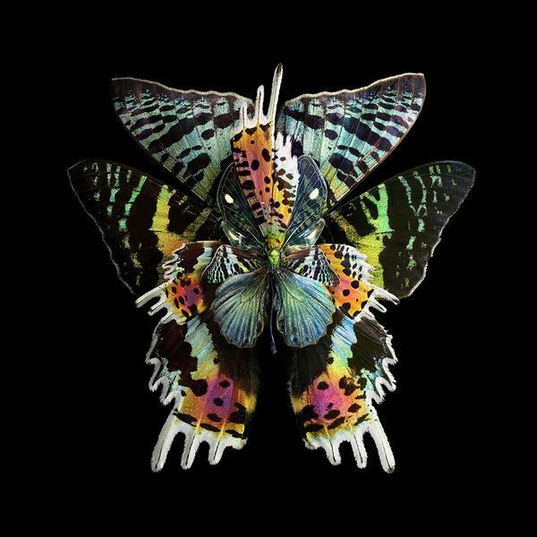 蝶々や昆虫の翅(はね)を合成して作った花の写真シリーズ (6)