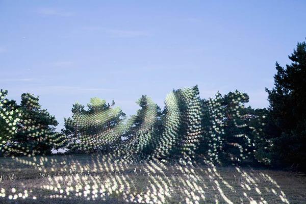 有機的なフォルムと幾何学的な光が融合する
