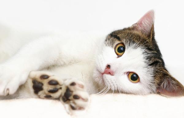 猫は自分の足を通して汗をかきます