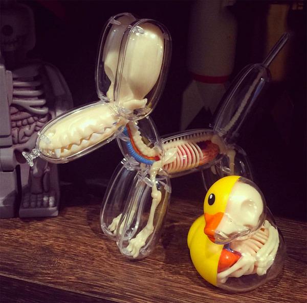 骨や内臓まで丸見え!解剖学のような動物のスケルトンの玩具 (8)
