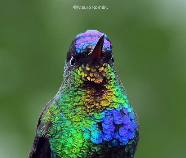 ハチドリ、可愛い、美しい小鳥の写真 (7)