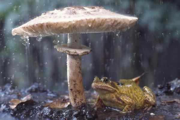 自然の傘を差す動物 13