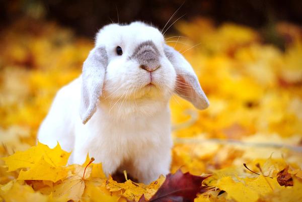 紅葉や秋の森の中を楽しむ動物たちの画像 (33)