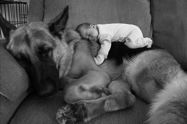ペットは大切な家族!犬や猫と人間の子供の画像 (83)
