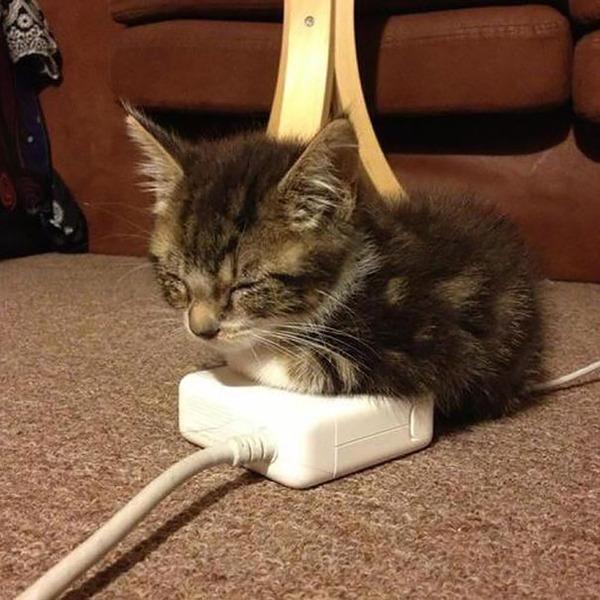 寝てるだけなのに…かわいすぎる猫たちの画像 (4)