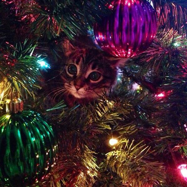 猫、あらぶる!クリスマスツリーに登る猫画像 (53)