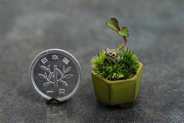 超小さい盆栽