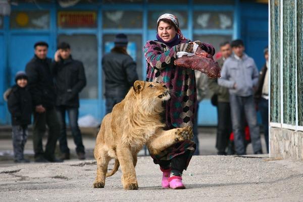 珍しいペット特集 ライオン,タジキスタン