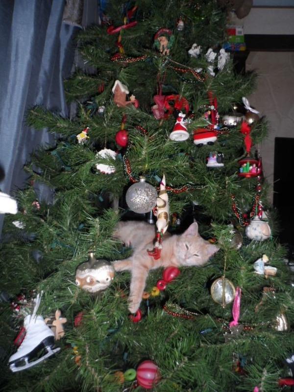 猫、あらぶる!クリスマスツリーに登る猫画像 (49)
