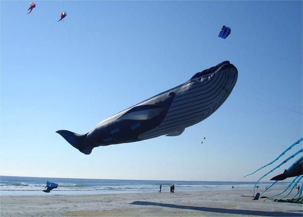 空の水族館!超大きいシロナガスクジラの凧がビーチに浮かぶ (6)