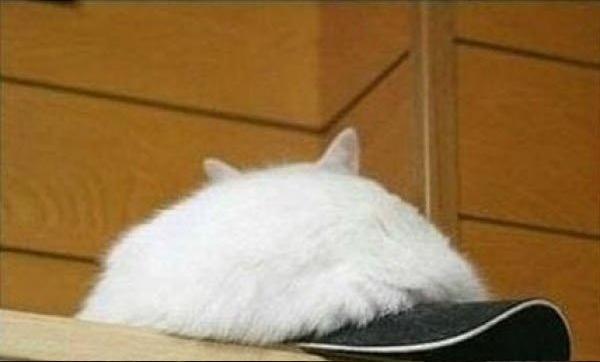 モコモコ帽子猫