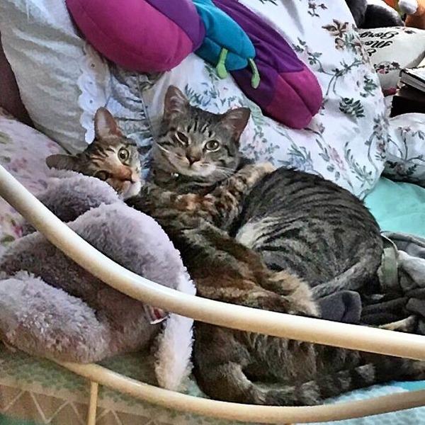 猫のバレンタインデー!【猫ラブラブ画像】 (50)