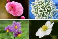 普段は食べ物として食べちゃうけど実はとても綺麗に咲く花19選