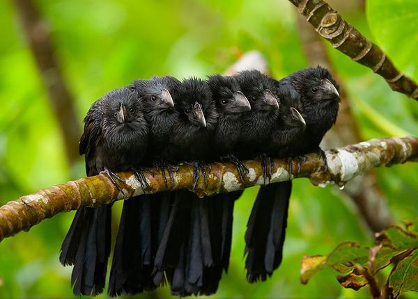小鳥が温まる為に皆で寄り添っている可愛い画像 (22)
