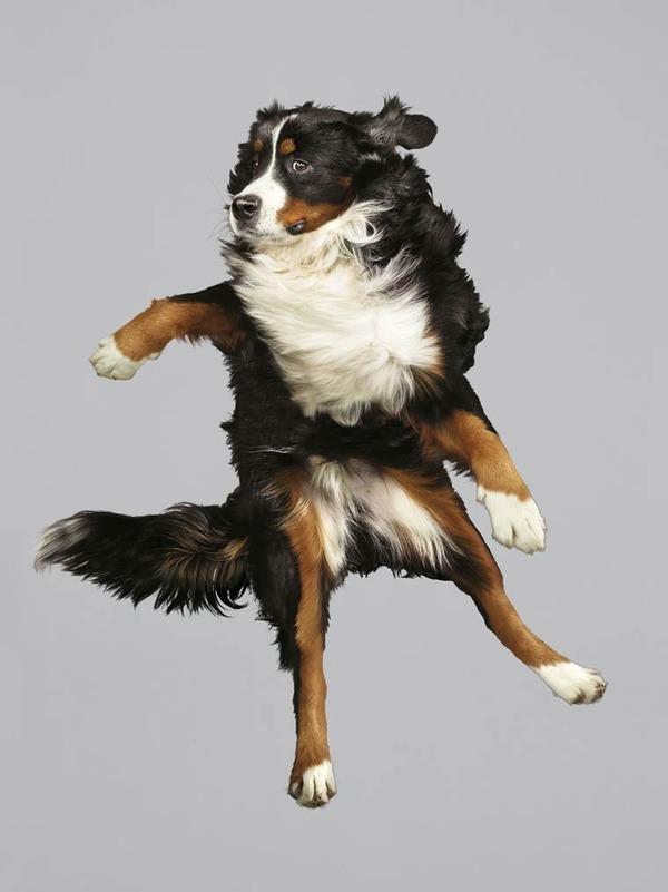 飛ぶ犬!空飛ぶわんこの絶妙な表情が逸品な写真 (5)