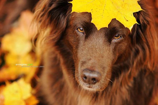 秋が来た!紅葉と遊ぶ犬画像 (13)