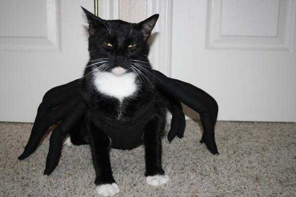 コスプレ猫!ハロウィンだし仮装した猫画像 (19)
