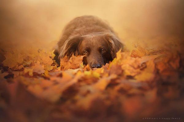 秋が来た!紅葉と遊ぶ犬画像 (12)