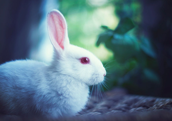アリスを探すウサギ