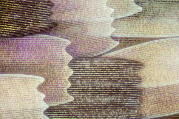 カラフルで美しすぎる!蝶の羽を拡大したマクロ写真 (11)