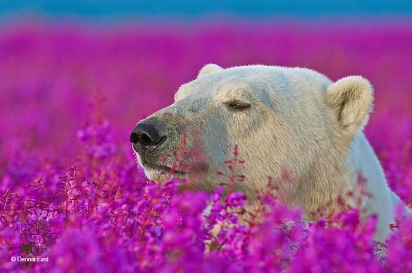 くんくん良い香り。花の匂いを嗅ぐ動物たちの画像 (26)