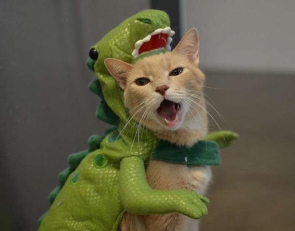 コスプレ猫!ハロウィンだし仮装した猫画像 (23)