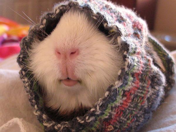 寒いからニットのセーターを小動物に着せてみた画像 (27)