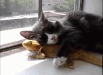 お気に入りのトカゲをゲットした猫!【GIF+動画】