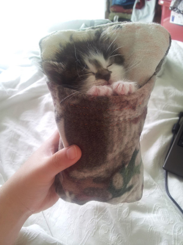 子猫専用の寝袋